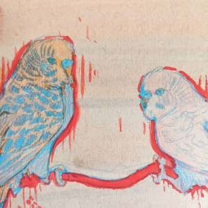 Close up to a drawing of two budgies in red, blue, orange and pink on toned paper.